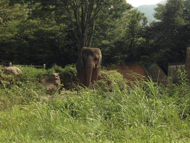 車窓から見たゾウ(富士サファリパーク)