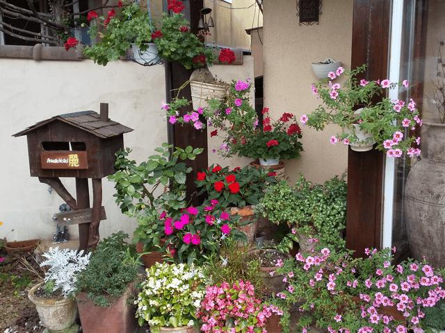 写真:「プライベートホテル・麗」の花たち