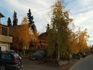 秋のイエローナイフ別荘街