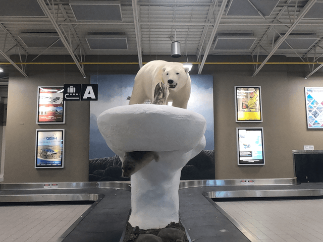 写真:イエローナイフ空港ロビーにあるシロクマ像